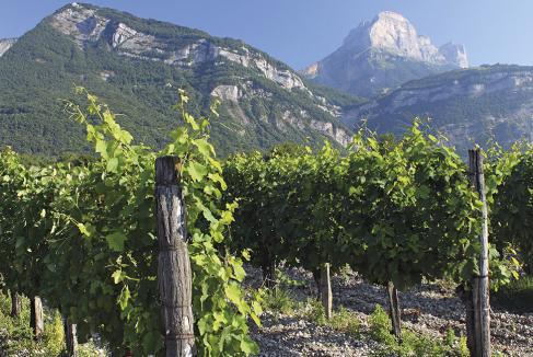 Les Lauréats 2018 des vins produits en Isère